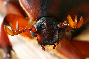 Insects01